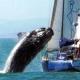 No asustes a las ballenas