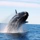 Avistar ballenas