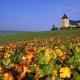 Francia: la ruta virtual del buen Champagne