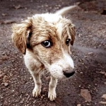 Lo que piensan los perros de nosotros