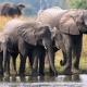 Safari a la uruguaya en Malawi
