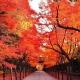 Momijigari, el otoño en Japón