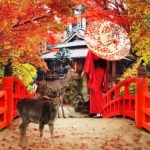 Momiji, el otoño japonés