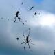 Lo que faltaba: lluvia de arañas