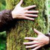 Árbol, eterno, elocuente y pacífico... pero no siempre