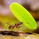 Las hormigas que se ríen de las pruebas Pisa