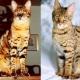Gatos desconocidos y no tanto