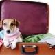 Viajar con la mascota