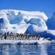 Vamos a la Antártida