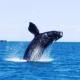 Puerto Madryn: Ballenas, deportes náuticos y más