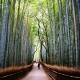 Concierto de bambú