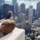 Las aves se mudan a la ciudad