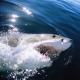 La playa más repleta de tiburones