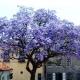 El verdadero árbol de la vida