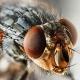 Los misterios de la mosca