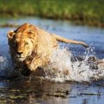 Okavango, el río que desafía a la Biblia
