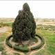 Ciprés mítico y eterno: 4.500 años y tan campante