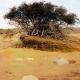 1831, 1832, la gran seca