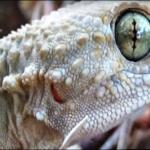 inmigrantes geckos piden un lugarcito