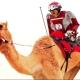 Sorprendentes carreras de camellos