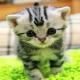 La extraña historia del gato doméstico