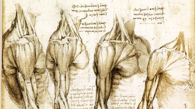 05_anatomist_fullsize (1)