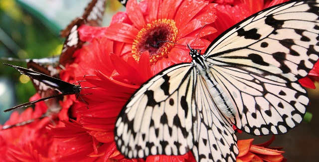 1140x425-lvl3_masthead-butterfly_garden