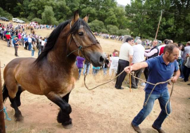 Feria del caballo Hispano Bretón en San Emiliano. F. Otero Perandones.