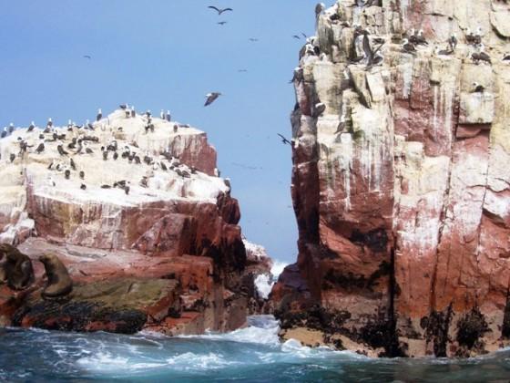 133-paracas-islas-ballestas1