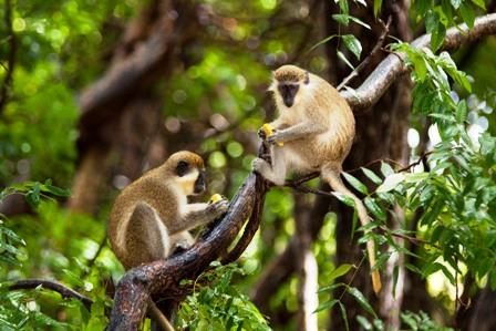 1_Barbados Wildlife Reserve