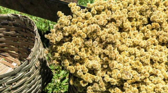 500g-de-marcela-flores-e-sementes-D_NQ_NP_834811-MLB20641266531_032016-F