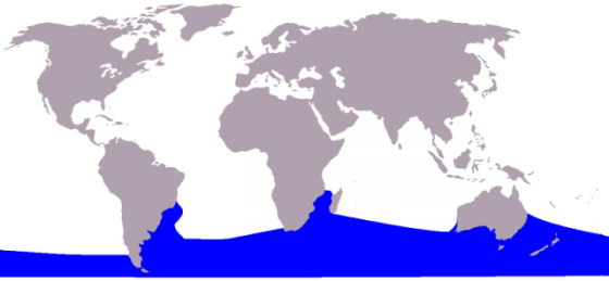 800px-Cetacea_range_map_Southern_Right_Whale