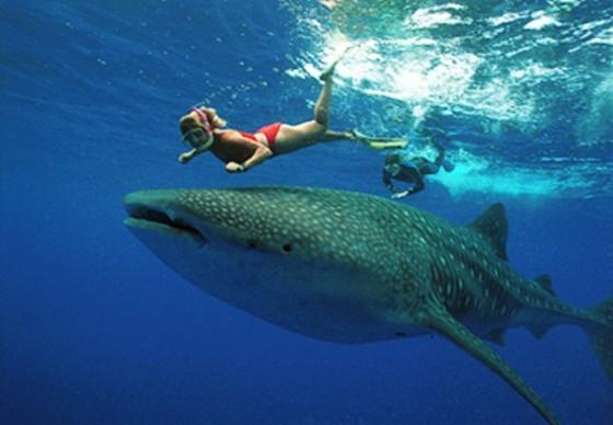 25 patrimonios mundiales mas...-http://viajes.elpais.com.uy/wp-content/uploads/93187_Tiburon20Ballena20061-560x388.jpg