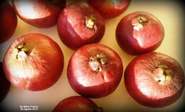 ARAÇA-VERMELHO - fruto macro
