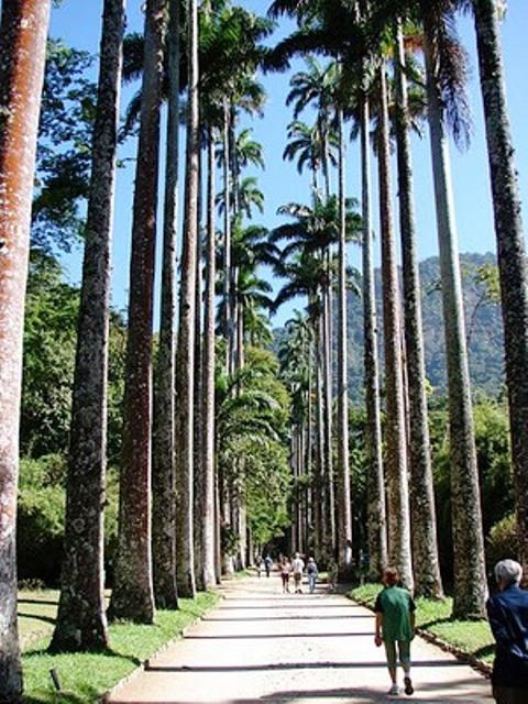 Bares_en_parques_Cafe_Botanica_Jardim_Botanico_Rio_02