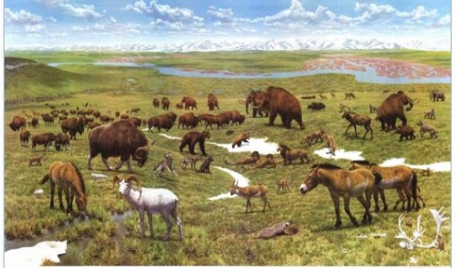 Beringian-Wildlife