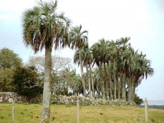 CorralDePalmas-Panoramio-FinalCut