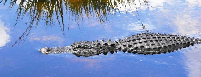 Everglades2-1600x960-1600x800