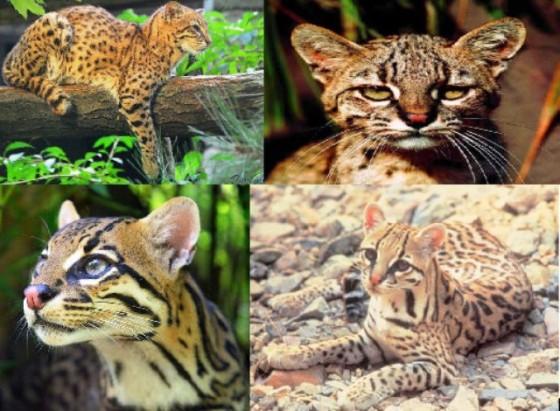 Gatos...-http://viajes.elpais.com.uy/wp-content/uploads/F62-560x411.jpg