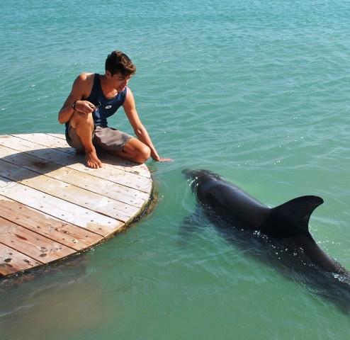 Foto 3 Dolphin Reef. Nadar con delfines en libertad