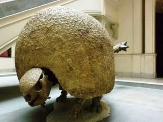 Glyptodon_366
