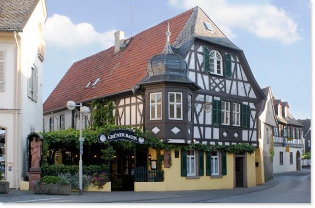 Gruener_Baum_Oestrich_Aussen_650px
