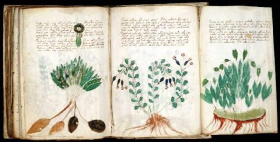 Manuscrito_Voynich