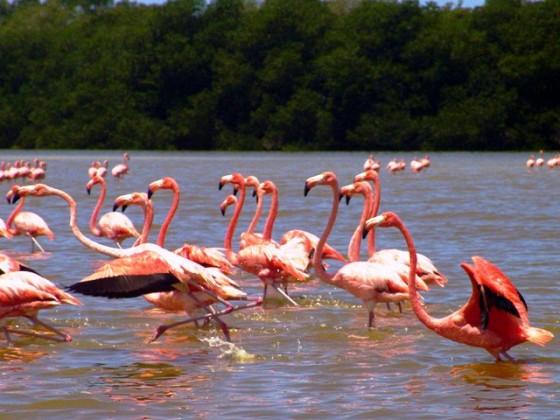Reserva Biosfera Ria Celestun Campeche
