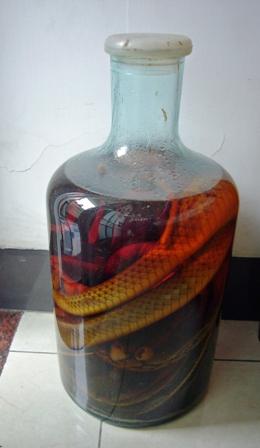 Snakewine