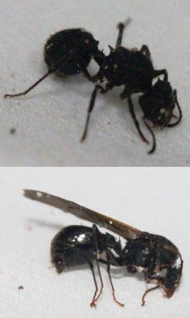 acro-macho-hembra