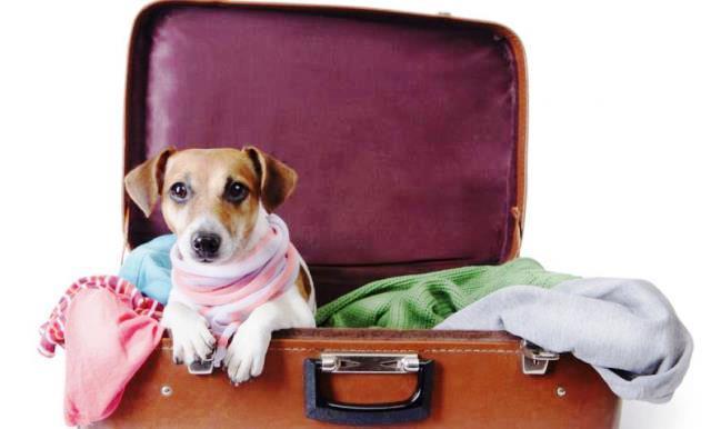 aerolineas-que-permiten-viajar-con-mascotas-en-cabina-1