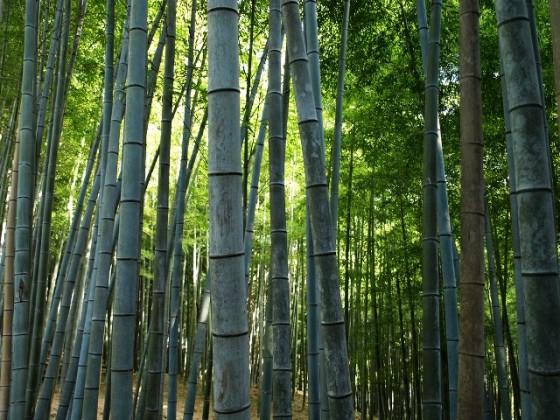 bamboo-leaf-rhapsody