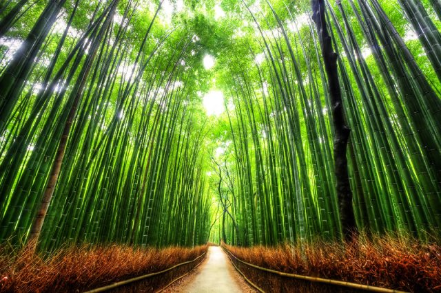 bamboo_forest_kyoto_by_kaboose_18-d2tqh39