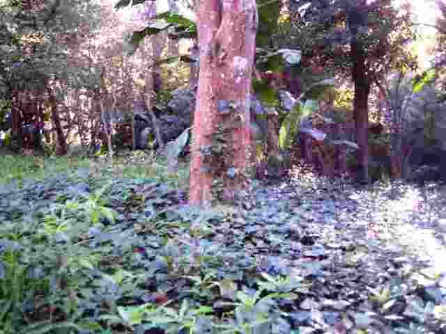 bosque-Lussich..